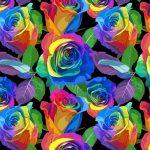 rainbow_rose_800x